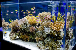 Custom Fish Tanks by Living Art Aquatics, Inc.