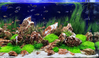 Freshwater Aquarium Mainenance