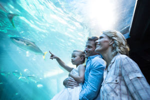 A family looks at an acrylic aquarium.