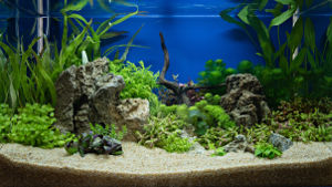Photo of a custom aquarium filled with plants.
