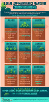 An infographic depicting popular plants for custom aquariums.