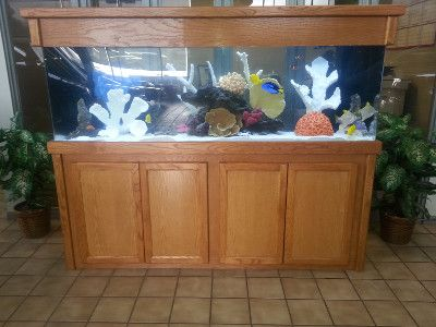 Saltwater fish in a custom aquarium