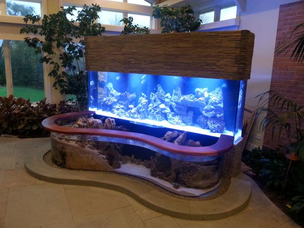 picture of a 900-gallon fish tank
