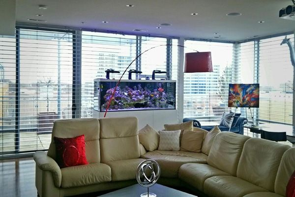 Picture of a home aquarium situated in a living room.